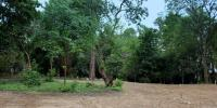 Glazier Woods Site Photo
