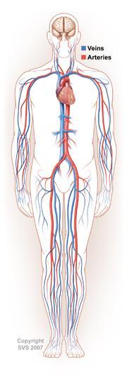 Vena Cava Filters, Embolic protection, Pulmonary Embolism, Venous Therapies