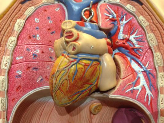 New FOURIER Analysis Examines How Low Cholesterol Can Safely Go