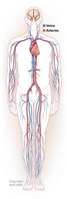 Vena Cava Filters, Embolic protection, Pulmonary Embolism, Venous Therapies