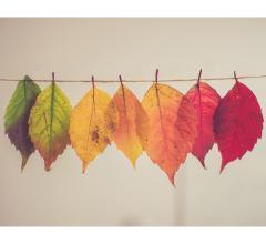 Unsplash fall leaves