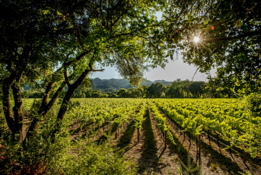 Winery with reclaimed water from irrigation